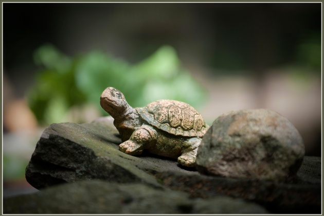 HDR-Turtle