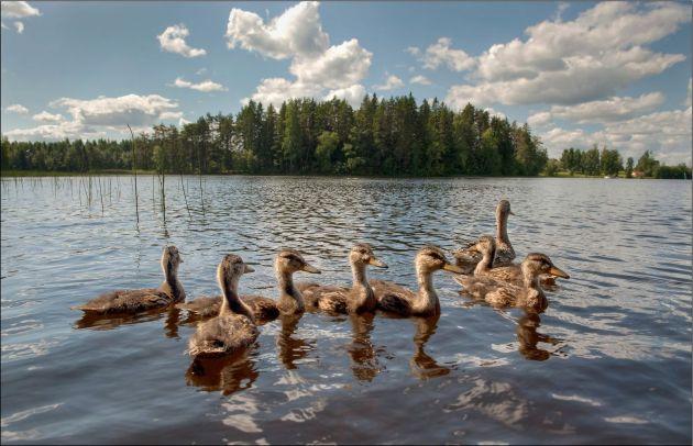 DucksFinland