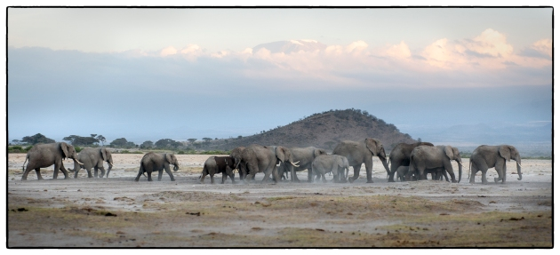 ElephantsAtKilimanjaro