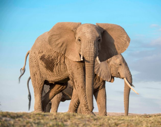 ElephantsSmall
