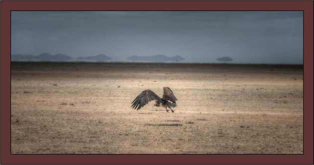 AfricaBird1