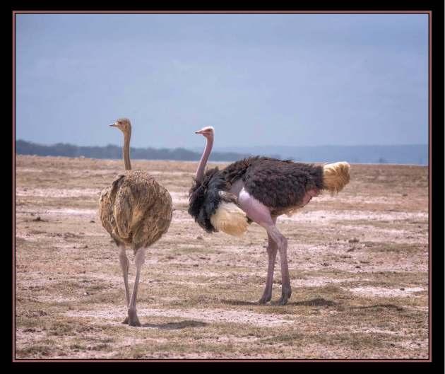 AfricaBird2