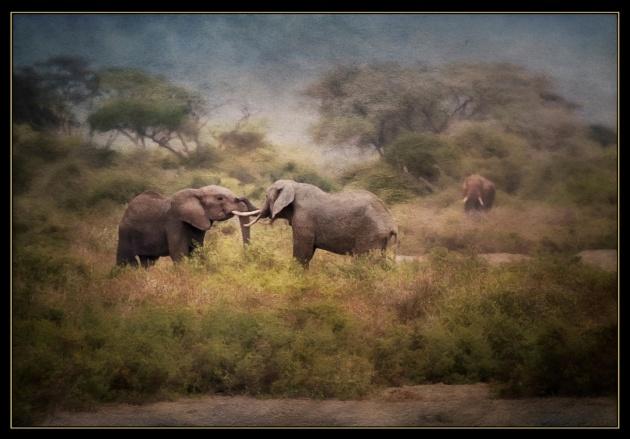 ElephantFriends