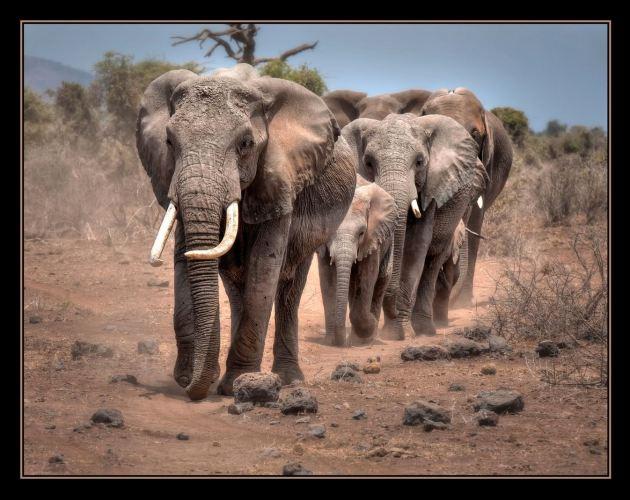 MoreAfrica3